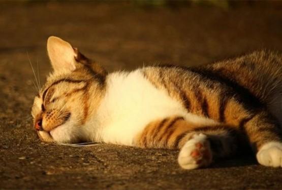 Hapšenje u Laktašima: Ubio komšiji mačku jer mu je zadavila piliće