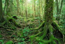 Mještani banjalučkog naselja pronašli skelet u šumi