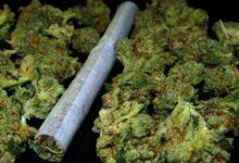 U Bileći pronađena droga