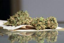 Kod više osoba pronađena marihuana